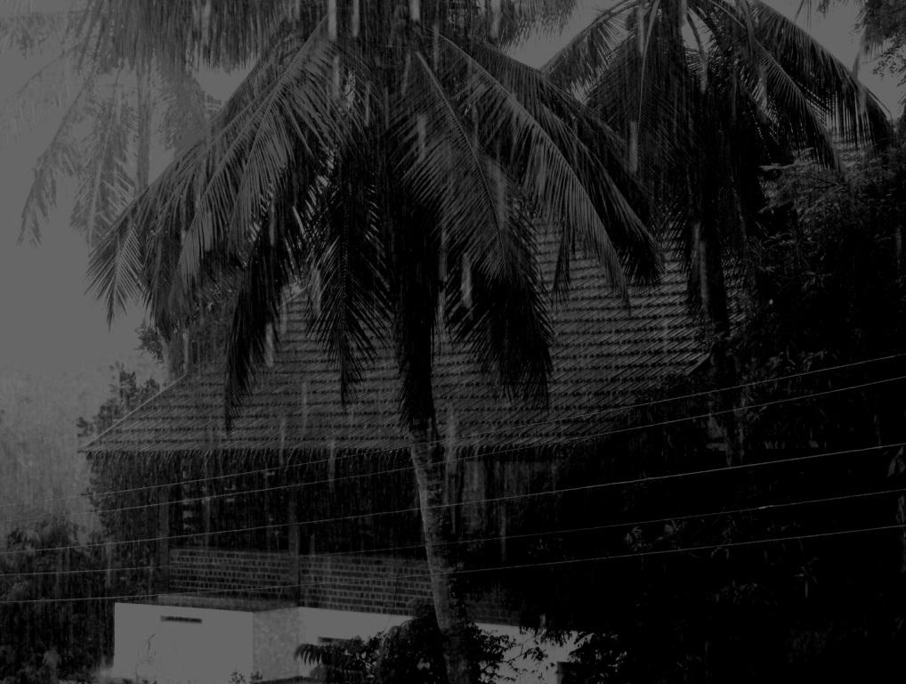 A Rainy Night Shail S Nest