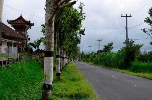 Bali 369