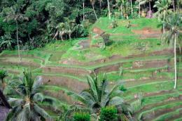 Bali 379