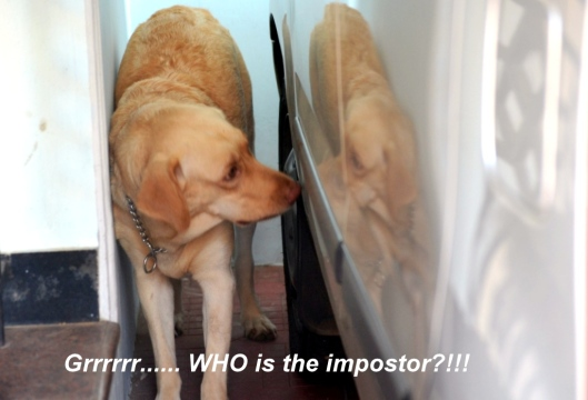 Luci and the impostor