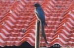1-bird-61