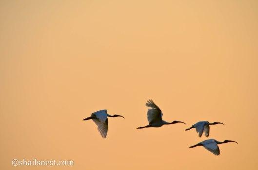 bird-366