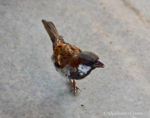 bird-450