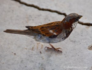 bird-451