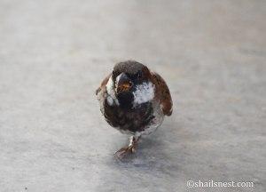 bird-453