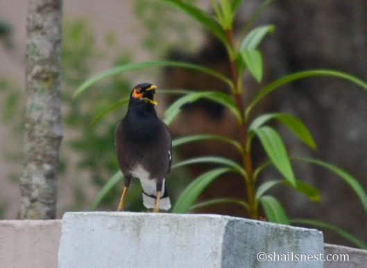bird-540