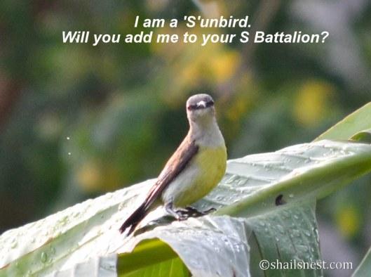bird-57