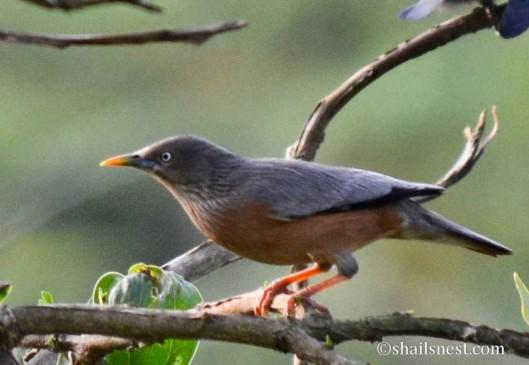 bird-573