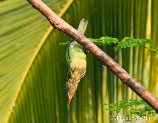 bird-607