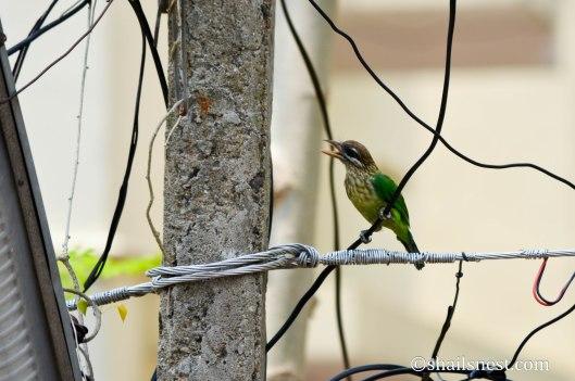 bird-628