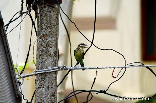 bird-629