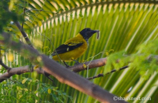 1-bird-386