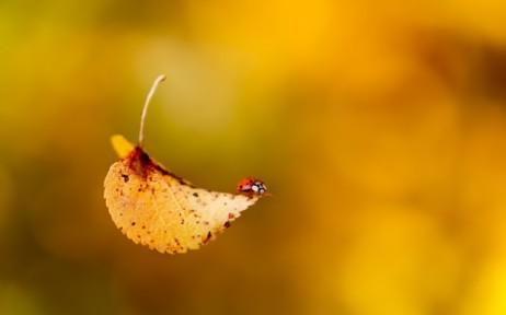 falling-leaf-and-lady-bug-600x375 (1)
