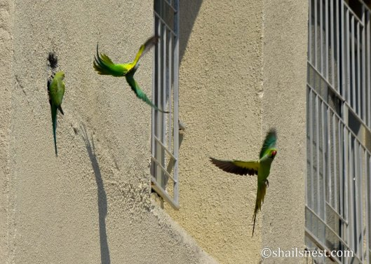 bird-449