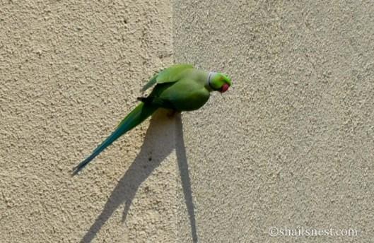 bird-454