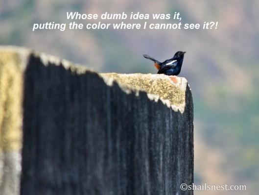 1-bird-155