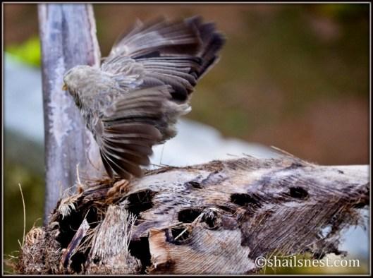 1-bird-244