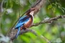 1-bird-298