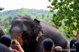 Sandhya clicking elephants