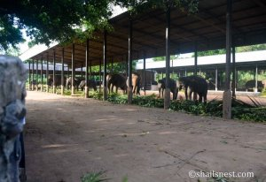 Elephants in their stalls