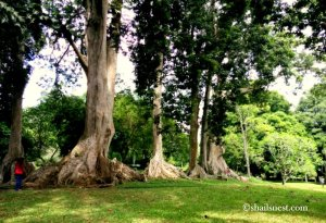 1-botanical garden 2