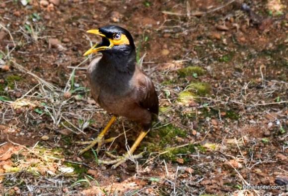 1-bird-181