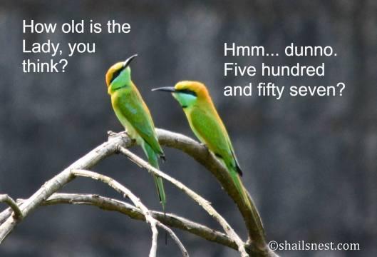 Bday birds