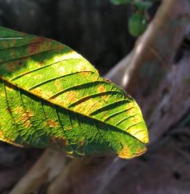leaf_Bokeh